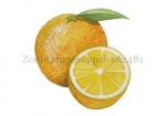 Zoete sinaasappel-182481