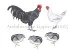Andalusische kippen-101005