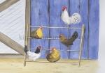 kippen op stok-101004