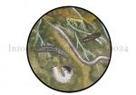 Inzoomen bodemleven-210024