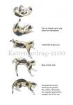 Kattengedrag-210014