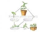 Kweken plant-210003