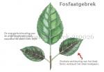 Plant-Fosfaatgebrek-210026