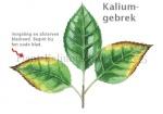 Plant-Kaliumgebrek-210035