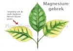 Plant-Magnesiumgebrek-210032