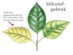 Plant-Stikstofgebrek-210044