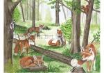 Vossen in het bos-210016