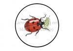 Zevenstippelig lieveheersbeestje eet bladluis-210039