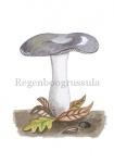 Regenboogrussula-19036