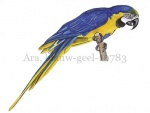 Ara, blauw-geel-10783