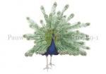 Pauw-oud verenkleed-10789-1