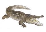 Krokodil-17052.jpg