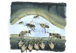 Honingbij-Darrenn vliegen uit nest-14547-1
