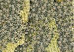 Honingbij-drukte op de raat-140033