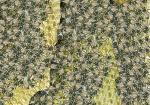 Honingbij-drukte op de raat-140036