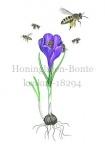 Honingbijen-Bonte krokus-18294