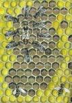 Honingbij-Koningin omringd door hofstaatbijen-140022