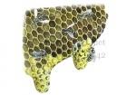 Honingbij-raat met moerdoppen-14542