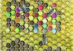 Honingbij-raat met stuifmeel-14574