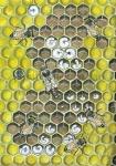 Honingbij-Raat van ei tot bij-14450-1