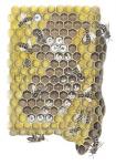 Honingbij-raat-van ei tot bij-14450