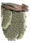 Honingbij-raat-zomertros-14607