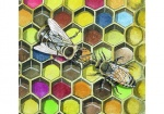 Honingraat met stuifmeel-werkster voert dar-14574