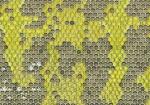 Honingraat-met eitjes en larve-140037