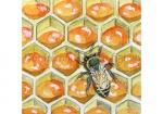 Honingraat-nectar-15629
