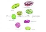 Pollen - stuifmeel-140010