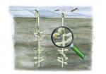 Rootpotige groefbij-Nestgangen onder stoeptegels-140020