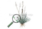 Kommavlinder-eitje en rups in Buntgras-14648-1