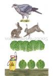 voedselketen-210055