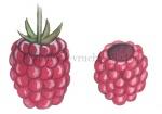 Framboos-vrucht-282499