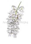 Acacia-bloei-182564