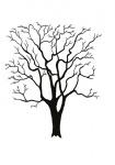 Acacia-silhouet-winter-182503.jpg