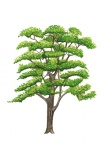 Acacia-silhouet-zomer-182547.jpg