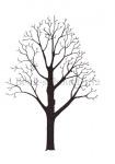 Beuk-silhouet-182494