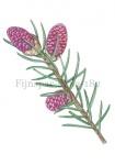 Fijnspar-bloei-182561