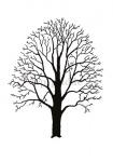 Iep, gladde-silhouet-winter-182508