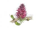 Lariks-bloei-182560