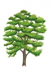 Notenboom-silhouet-zomer-182546