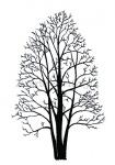 Zwarte els-silhouet-winter-182514