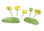Gele plomp-182599.jpg