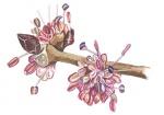 Ruwe-iep-bloem-182633.jpg