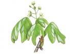 Veldesdoorn-bloem-182628.jpg