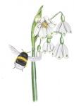 Zomerklokje-bloem-hommel-182380-3.jpg