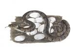 Ringslang-eieren-nest-17056.jpg