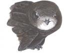Gierzwaluw-kop-10824.jpg
