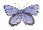 Heideblauwtje-14037